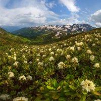 Цветущие горы Абхазии :: Фёдор. Лашков