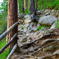 Аршан, тропа на водопады :: Nikolay Svetin