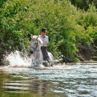 Купание коня :: Наталья Ильина