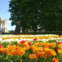 Верхний сад. :: Лия ☼