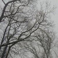Снежное утро :: Наталья Ерёменко