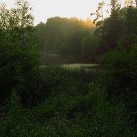 Вечер на пруду после дождя :: Андрей Лукьянов
