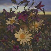полевые цветы :: Наталия П