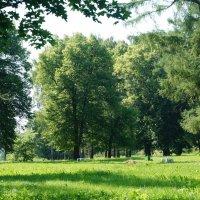 Парк города Приволжск :: Tanya