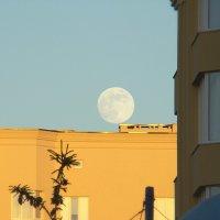 Луна в лучах заката :: Syntaxist (Светлана)