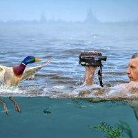 Видео охота за уткой. :: Ринат Валиев