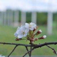 Весна :: Лето Теплое