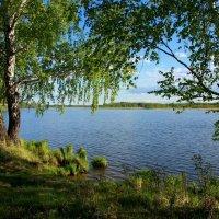 Льются листья с высоких ветвей... :: Нэля Лысенко