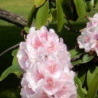 Пчелки и цветочки :: Елена Гуляева (mashagulena)