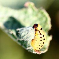 Закатайте меня, хочу быть бабочкой... :: Dmitry Saltykov