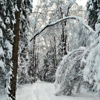 Парк зимой :: Виктор Неклюдов