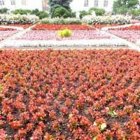 Целое море цветов. :: Мила
