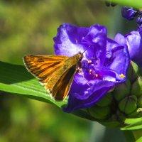 цветы DSCF2742 :: Олег Петрушин