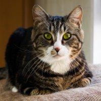 ЛАСКА, Центр помощи кошкам на Сахалине https://vk.com/laskasakhalin. Сэм :: Margarita Ласковая