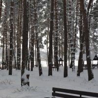 зима в лесу :: Татьяна Лаптева