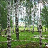 Живая изгородь.. :: Александр Шимохин