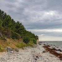 Estonia 2018 Saaremaa Panga :: Arturs Ancans