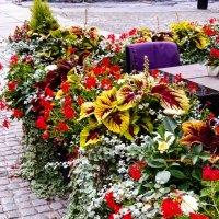 Гданьские цветы :: Galina Belugina
