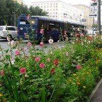 Городские цветы :: Ирина - IrVik