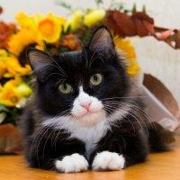 ЛАСКА, Центр помощи кошкам на Сахалине https://vk.com/laskasakhalin. Феликс :: Margarita Ласковая