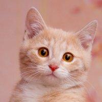 ЛАСКА, Центр помощи кошкам на Сахалине https://vk.com/laskasakhalin. Санечка :: Margarita Ласковая