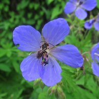 Цветы лета :: Лариса