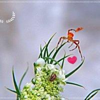 Весёлый цветочник! ... фотошутка ) ) :: Елена (Elena Fly) Хайдукова