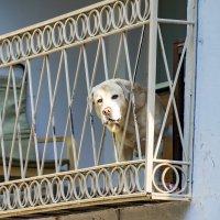 забавный собакен... :: Наталья Меркулова