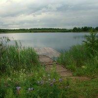 Тихое озеро,сочные травы... :: Нэля Лысенко