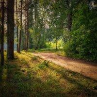 Солнце в лесу :: Александр Шишин