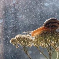 Под дождем! :: Дина Горбачева