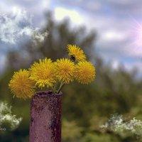 Первые цветы. :: Анатолий