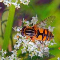 Прекрасная цветочница! :) :: Елена (Elena Fly) Хайдукова