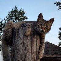 Я на столбике лежу и усами шевелю... :: Светлана Рябова-Шатунова