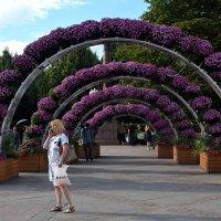 Арками из живых цветов украсили Трубную площадь. :: Татьяна Помогалова