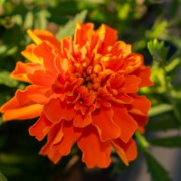 цветок :: Евгений Ветров
