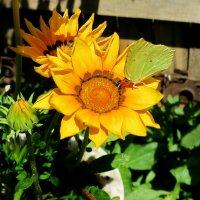 Цветы и бабочки :: Liliya Kharlamova