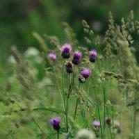 Луговые травы :: Татьяна Соловьева
