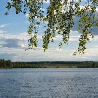 Мир природы... :: Нэля Лысенко