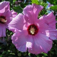 цветы IMG_0693-45 :: Олег Петрушин