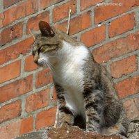Кошка :: Nina Yudicheva