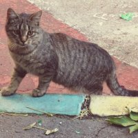 Простая кошка :: Дмитрий Никитин