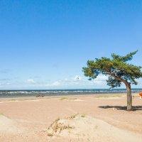 На Финском заливе (8) :: Виталий