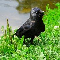 Взгляд серьёзной птицы :: Милешкин Владимир Алексеевич