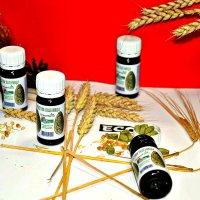 Витграсс - спрессованные сушеные зеленые ростки пшеницы. :: Михаил Столяров