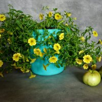 Желтые цветы :: Елена