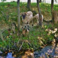 В жаркий полдень у ручья :: Андрей K.