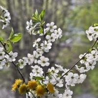 Воспоминания о весне ... :: Ольга Винницкая (Olenka)