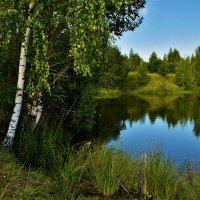 Березы у воды :: Oleg S