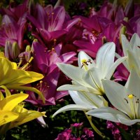 В мире цветов так тепло и прохладно :: Derjavin -